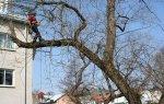 Trädbeskärning i Stockholm
