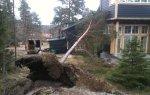 Arboristarbete Stockholm